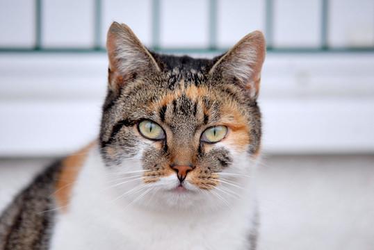 Freigänger Katze